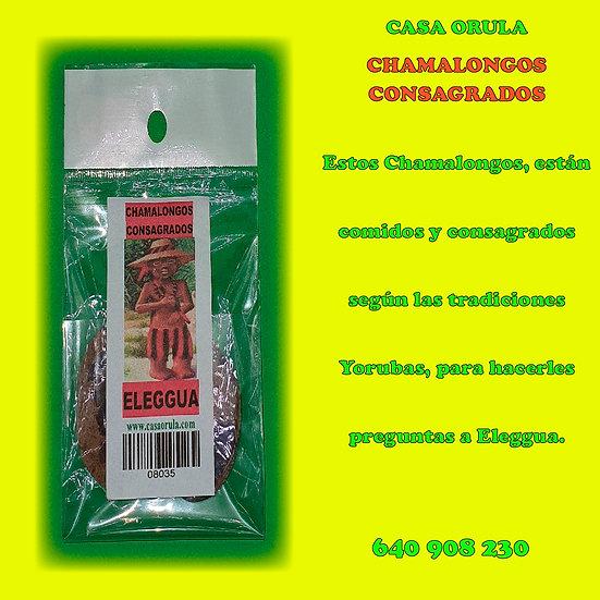 CHAMALONGOS CONSAGRADOS DE ELEGGUA