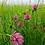 Thumbnail: Seedball - Plantlife