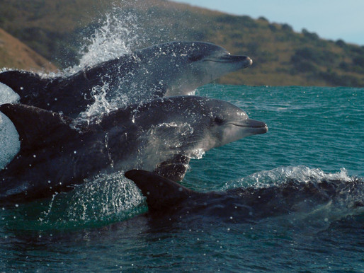 Ίδρυμα Ευγενίδου: «Ωκεανοί: Ο Γαλάζιος Πλανήτης μας», μία παραγωγή του BBC Earth