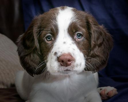 puppy-2940583_1920.jpg