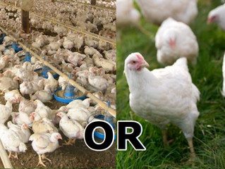 Why Pastured Poultry?
