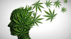 Cannabis & MH