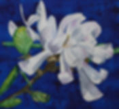 Star Magnolia 1.jpg