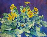 Balsam Flowers