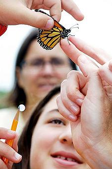 butterfly1899lores.jpg