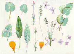 Herbs Sketch