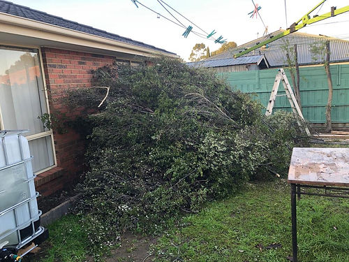 green waste rubbish removal after