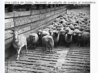 Todas las cabras de Judas