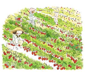 strawberryfieldssml.jpg