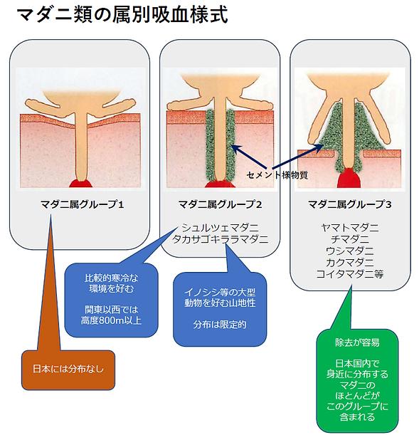 日本のマダニの噛み方の特徴.png
