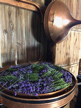 Full-of-Lavender-Copper-Alembic-Still-re