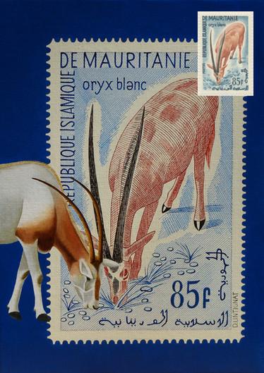 Oryx Blanc