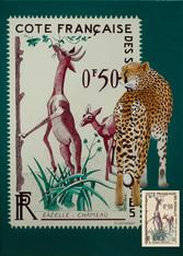 Gazelle Chameau