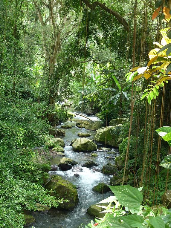 Balinese tropical rainforest