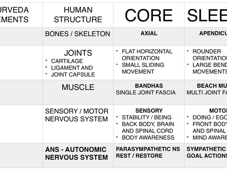 5.1 - Psoas and Core?