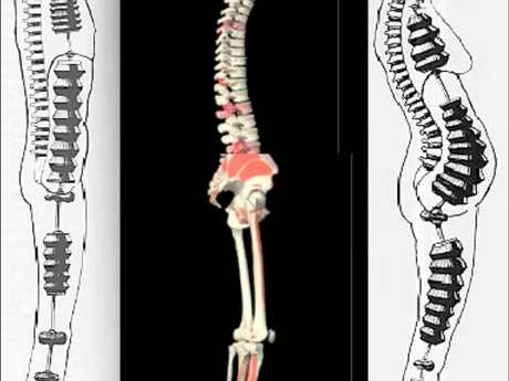 2  WHAT  IS  POSTURE?