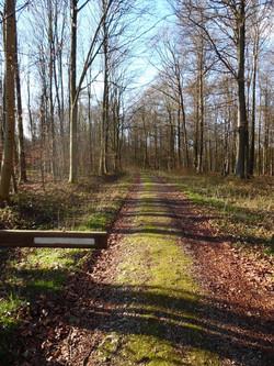 Forêt d'Eawy