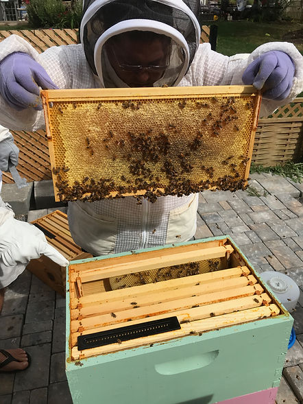 Owner Dee checking the hives.