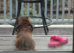 Penny and the pink slipper