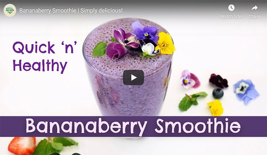 Banana berry Smoothie, made with milk powder. Simply delicious. Recipe to start your day, healthy.