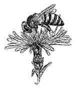 Pollen_edited.jpg