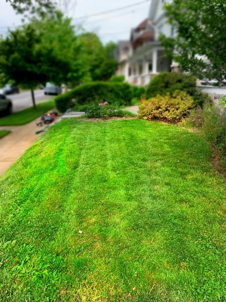 Mowed Lawns