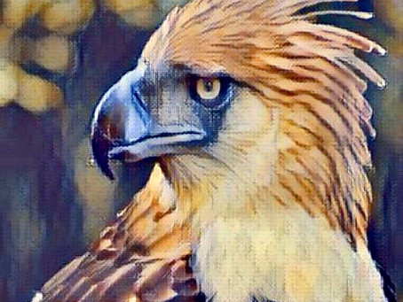 Help support caretakers of endangered Philippine eagles