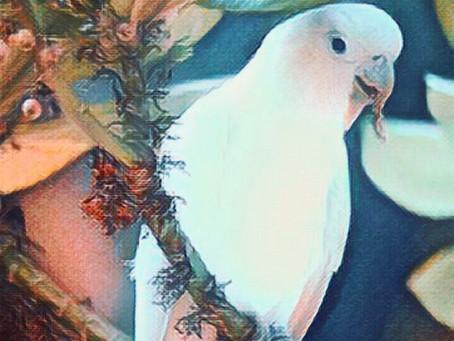 Art Challenge: Raise awareness for endangered animals