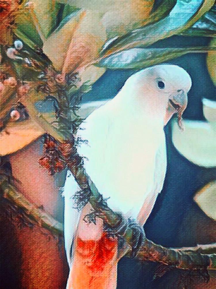 Philippine cockatoo