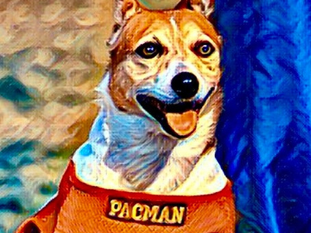 R.I.P. Pacman the Dog