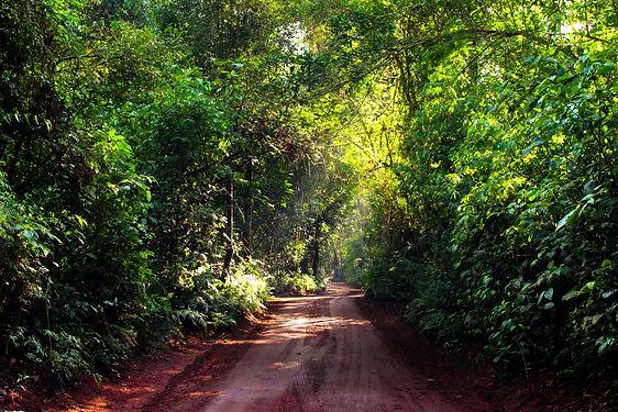 Jungle Road (1).jpg