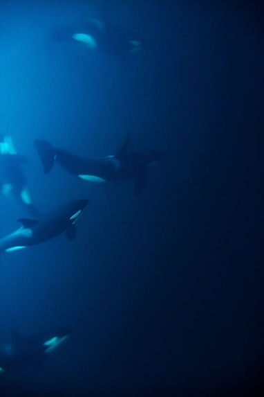 Whales in ocean