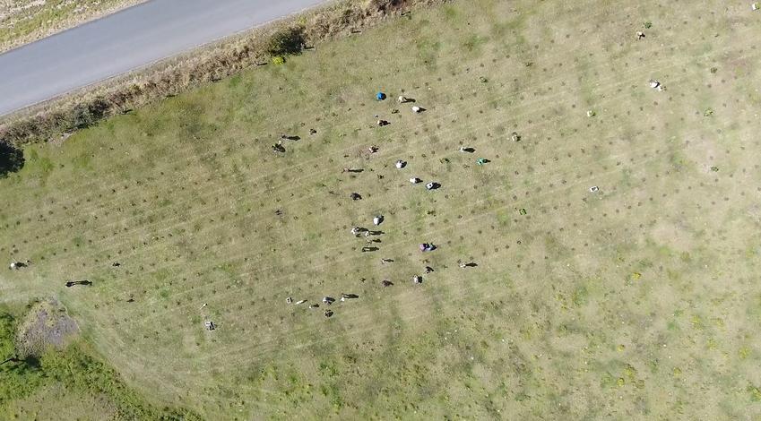 Drone Planting 1 Myocum Rd.png
