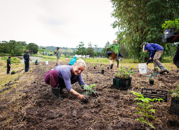 Reforestation at Conscious Grounds - A collaboration