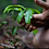 Thumbnail: Trees planted