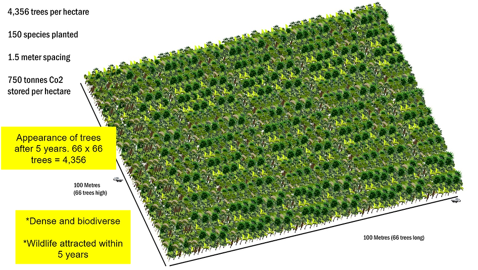 trees per hectare.png