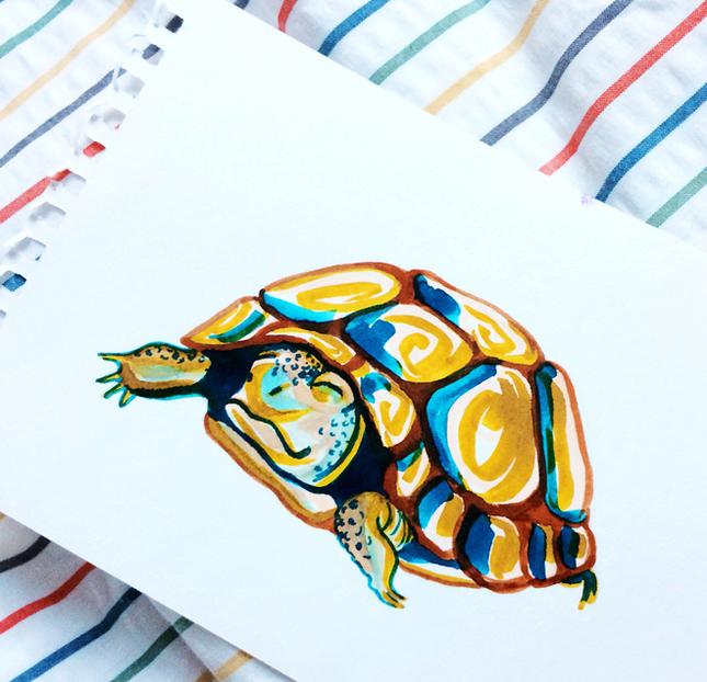 Topsy Tortoise