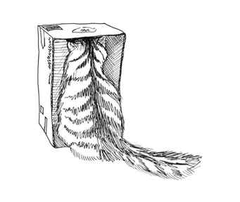 cat-in-a-box-2017-abby-hobbs.jpg