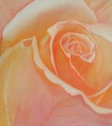 Neha ruže 1 50x60cm