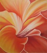 Muškátový kvet 10 60x40cm