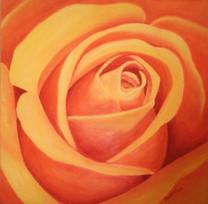 Ruža 50x50cm