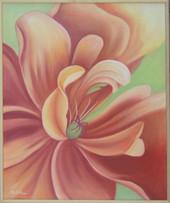 Muškátový kvet 3 50x60cm