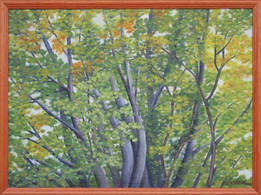Poézie stromu 1 52x38cm
