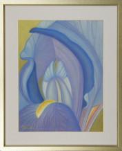 Modrý kosatec 1 45x56cm