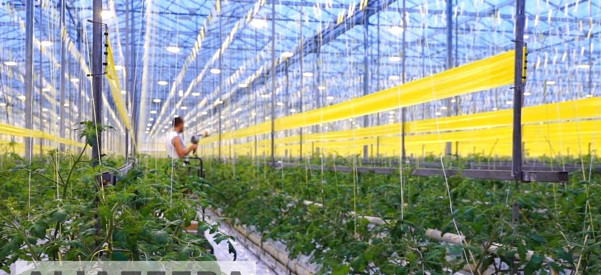 Hydroponics in the Desert