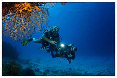 PADI Certifications Cozumel