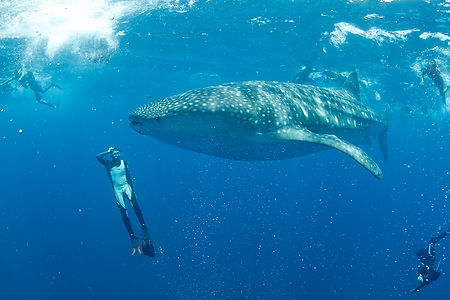 group-whale-shark-tours-cancun.jpg