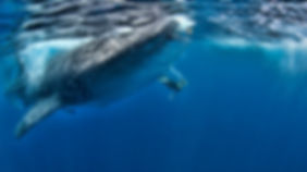 cancun-whale-shark-excursion.jpg