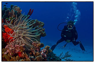 PADI Referrals Cozumel