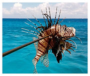 Spearfishing Cozumel